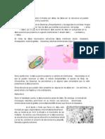 estructura y funcin celular