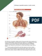 .3.Noţiuni de Anatomie Si Fiziologie a Aparatului Respirator Si Cardio-Vascular