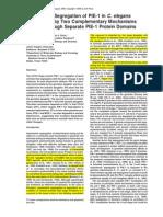 Asymmetric Segregation of PIE-1 in C. elegans