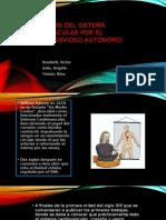 Regulación Del Sistema Cardiovascular Por El