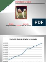 Clase3-Biosintesis de La Lechev