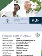 Quinua Tacna 14