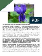 Viola Odorata, Amaranthus, Cranberry, Puya Alpestris,BlueBerry seeds