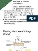 nerveimpulse-101228011905-phpapp01