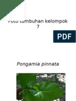 Foto tumbuhan kelompok 7.pptx