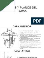 Lineas y Planos Del Torax