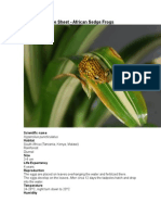 Care Sheet - African Sedge Frogs