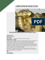 Care Sheet - Amethystine or Scrub Python (Morelia amethistina)