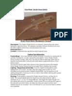 Care Sheet - Asiatic House Gecko (Hemidactylus frenatus)