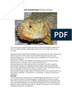 Care Sheet - Bearded Dragon