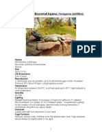 Care Sheet - Beavertail Agama (Xenagamas()