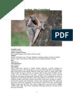 Care Sheet - Blue crested Lizard