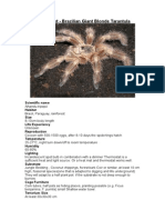 Care Sheet - Malaysian Forest Scorpion (Heterometrus spinife