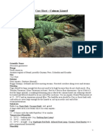 Care Sheet - Caiman Lizard