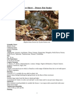 Care Sheet - Diones Rat Snake
