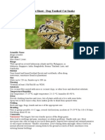 Care Sheet - Dog-Toothed Cat Snake