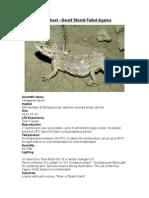 Care Sheet - Dwarf Shield -Tailed Agama