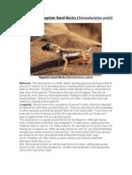 Care Sheet - Egyptian Sand Gecko