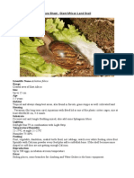 Care Sheet - Giant African Land Snail