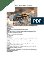 Care Sheet - Golden Striped Arrowfrog