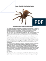 Care Sheet - Goliath Bird Eating Spider