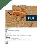Care Sheet - Gray's (Spiny) Agama