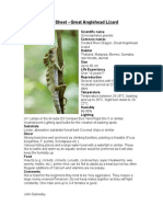 Care Sheet - Great Angelhead Lizard
