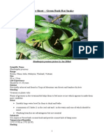 Care Sheet - Green Bush Rat Snake
