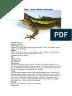 Care Sheet - Green Striped Tree Dragon