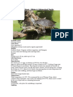 Care Sheet - Hillaire's Sidenecked Turtle (Phrynops geoffroanus)