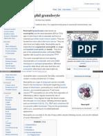 Neutrophil Granulocyte