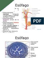 esofago2