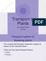 Transport in Plants (1)