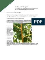 Altoirea Pomilor Fructiferi Pentru Incepatori