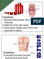 labels for digestion modeling activity