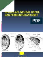 7. Neurulasi