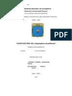 MONOGRAFIA DE CALOPHILLUM BRASILIENSE - Lagarto Caspi