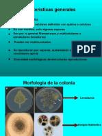 Microbiologia Hongos