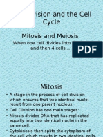 7 cell division mitosis meiosis