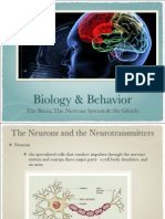 02thebrain-130817073737-phpapp01.pdf