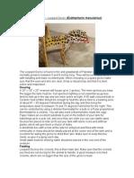 Care Sheet - Leopard Gecko  (Eublepharis macularius)