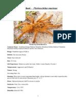 Care Sheet - Pterinochilus Murinus