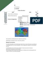 Enzimas - Acidos nucleicos, Citologia