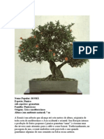 Romã Bonsai