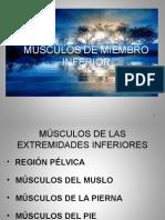 Urm Musculos