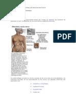Fisiología hormonal