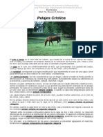 Pelajes Criollos Texto.2oo9