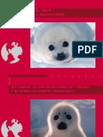 focas bebes