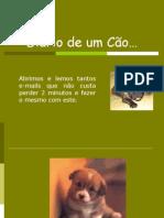 13 4 OmeuDiário pps