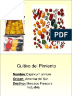 Ecofisiologia Pimiento